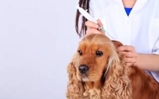 Как проглистовать щенка перед прививкой?