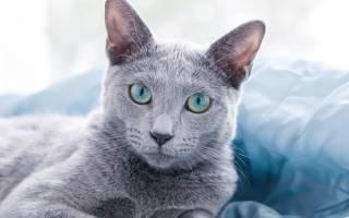 У кота горячие уши и сухой нос