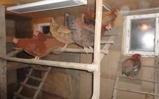 Лампа инфракрасная керамическая для птиц и животных – как обогреть цыплят?