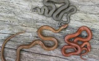 Змеи рожают или откладывают яйца, роды змей