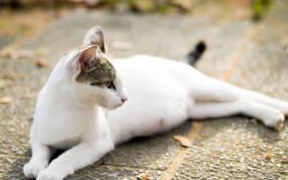 Кот часто дышит животом зрачки расширены — брюшное дыхание у кошки причины