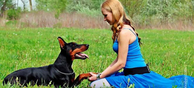 Как обучить собаку команде дай лапу?