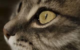 У кота из носа течет жидкость