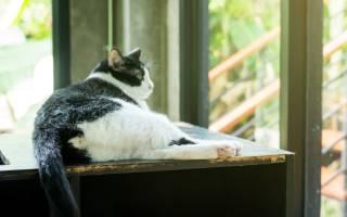У кота кровотечение из заднего прохода: кровь из попы у котенка