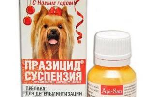 Празицид суспензия для собак инструкция по применению