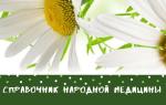 Монарда лимонная лечебные свойства и противопоказания
