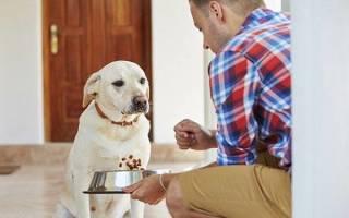 Что можно дать собаке при рвоте – почему тошнит щенка?
