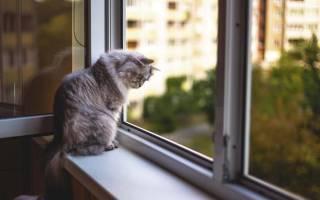 Что будет если спрыгнуть с 3 этажа, кот упал