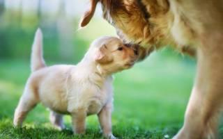 Сколько в среднем живут собаки домашние: продолжительность жизни колли