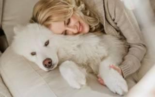Приспособление для мытья лап собакам своими руками, paw wash