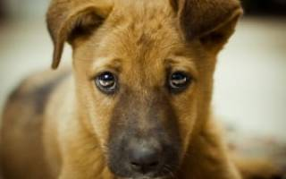Почему собака ходит в туалет дома?