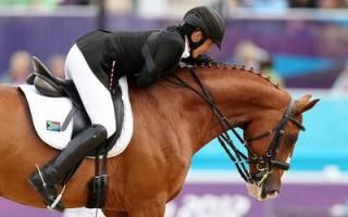 Лучшие породы лошадей для верховой езды