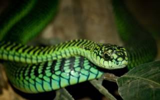 Самые ядовитые змеи мира фото – виды самых опасных змей