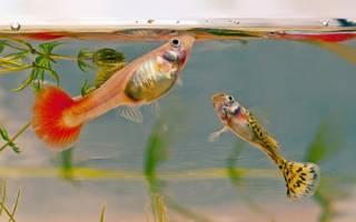 Живой корм для аквариумных рыбок своими руками