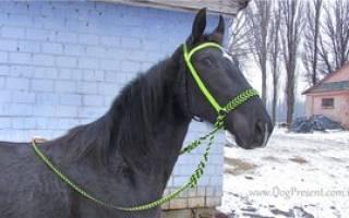 Как сделать уздечку для лошади своими руками, ремень узды