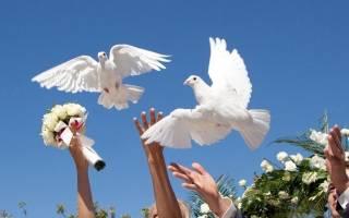 Как содержать голубей в домашних условиях?