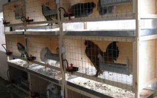 Содержание кур в клетках в домашних условиях