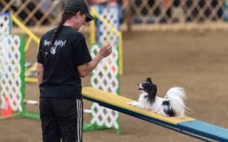 Что такое аджилити для собак?
