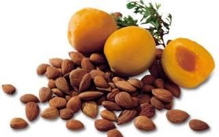 Зерна абрикосовых косточек польза и вред, чем полезны абрикосовые орешки?
