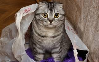 Почему кошки любят пакеты — почему кот лижет пакет?