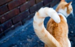 Если кот машет хвостом что это значит