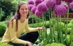 Цветы аллиум посадка и уход фото – луковицы аллиума