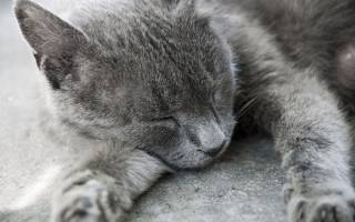 Как определить есть ли у кошки токсоплазмоз?