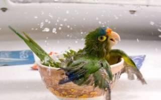 Как сделать купалку для попугая своими руками: ванночки для попугаев