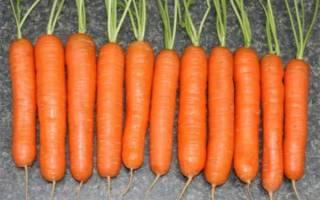Морковь нантская 4 характеристика и описание