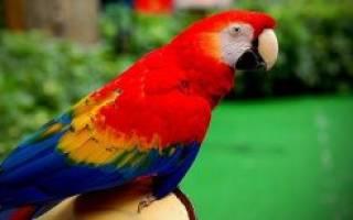 Мел для попугаев можно ли есть людям – минеральный камень для птиц