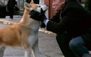 Самая верная порода собак