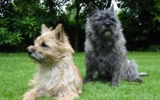 Собаки с шерстью как человеческий волос
