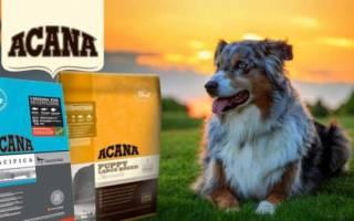 Дозировка корма акана для собак