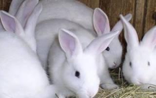 Когда можно покрывать крольчиху после окрола?