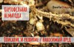 Как бороться с картофельной нематодой?