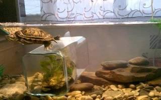 Как оформить аквариум для красноухой черепахи?