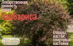 Корни барбариса лечебные свойства и противопоказания, барбарисовый корень