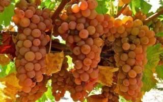Как определить сорт винограда по листьям фото?