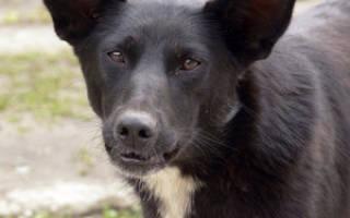 Собаки дворняги фото с названиями пород, кот двортерьер