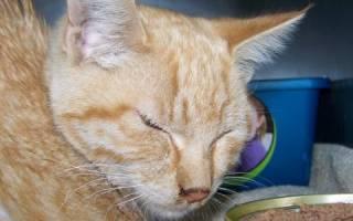 Как вызвать аппетит у кошки?