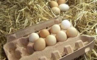 Сколько можно хранить инкубационное яйцо кур – закладка яиц в инкубатор