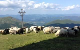 Овцеводство развито в: где в России разводят овец?