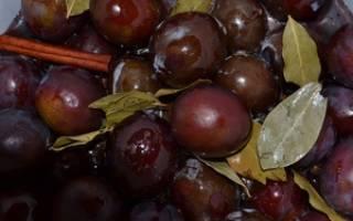 Сливы как оливки рецепт на зиму – чернослив маринованный под маслины