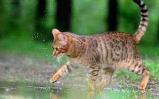 Смешные клички для кошек девочек прикольные, счастливое имя для кошки