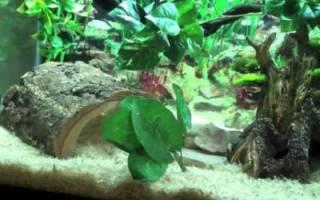 Как ухаживать за змеями в домашних условиях – дом для змей