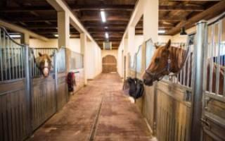 Денник для лошади своими руками