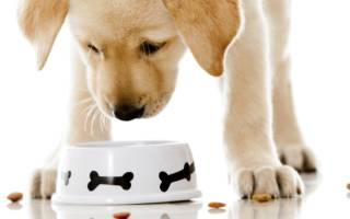 Чем кормить собаку при сахарном диабете?