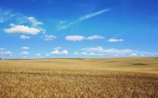 Сообщение о животных и растениях степи: интересные факты о степях
