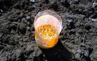 Урожайность кукурузы на силос с 1 га
