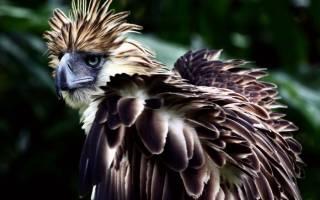 Самые большие хищные птицы в мире
